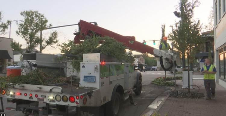 fairhope alabama - hurricane sally - replacing trees